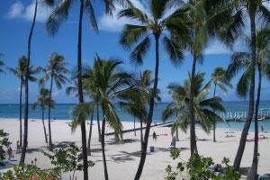 【トロピカルな気分を味わえる広大な敷地】ワイキキ屈指のビーチに面した9万平米の広大な敷地では、楽園そのもののリゾート体験をお楽しみいただけます。
